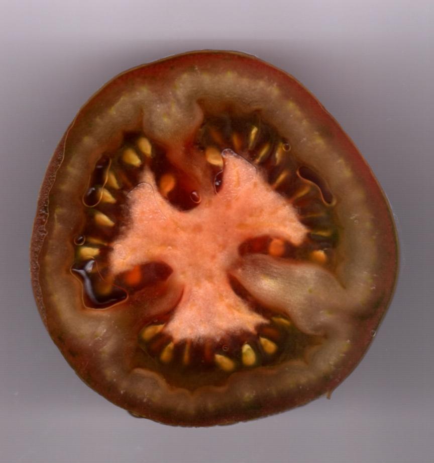 Pomidory kumato – odmiany pomidorów, uprawa pomidorów